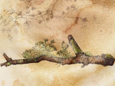 Stick with lichen