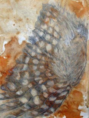 boo book owl wing