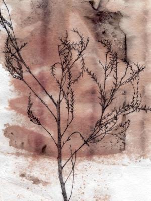 Gravillia Leaves