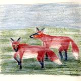 fox mist